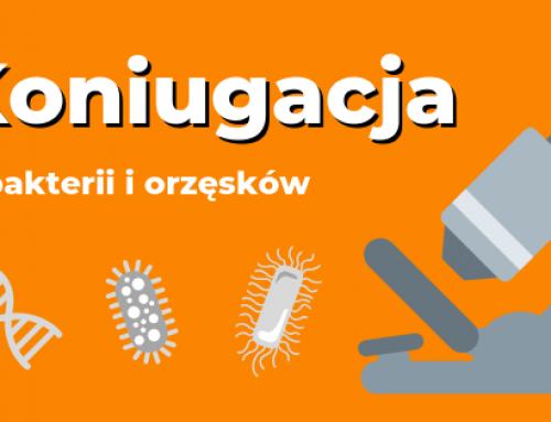 Koniugacja bakterii i orzęsków