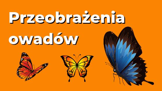 Metamorfoza owadów